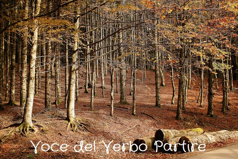Dove vedere il foliage in Appennino: itinerario autunnale
