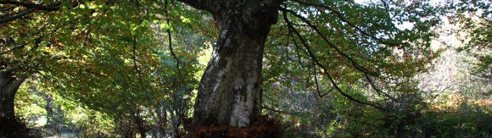 Foliage alla Faggeta di Canfaito: cosa fare, vedere e informazioni utili