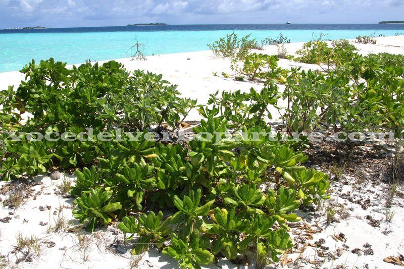 QUALI ESCURSIONI FARE DURANTE UN VIAGGIO ALLE MALDIVE
