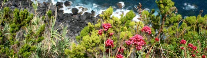 Viaggi per chi ama la natura: cinque mete da non perdere