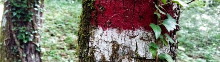 Escursione al Bosco di Tecchie: trekking facile nella faggeta